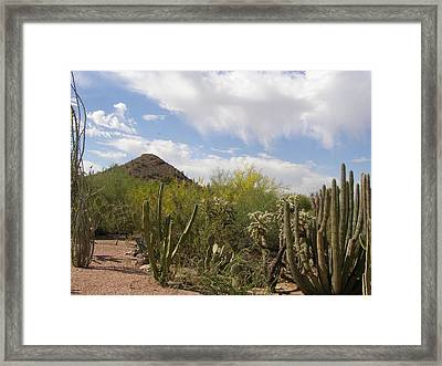 Cactus And Sand Framed Print by Jeanette Oberholtzer