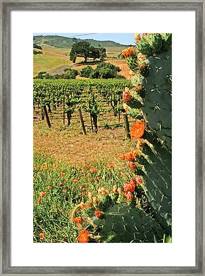 Cactus And Vines Framed Print