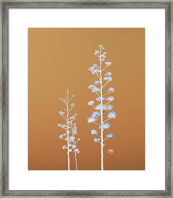 Cactus Architectre Framed Print by Linda Hollis