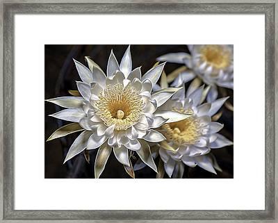 Framed Print featuring the photograph Cactus Art by Dan McManus