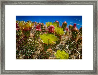 Cactus At The End Of The Road Framed Print by Bartz Johnson