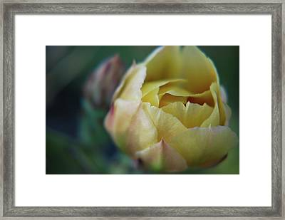 Framed Print featuring the photograph Cactus Beauty by Amee Cave