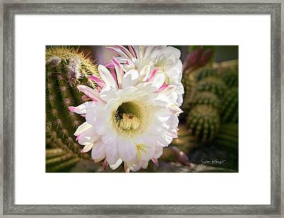 Cactus Bloom 2 Framed Print