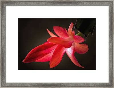 Cactus Bloom Aglow Framed Print by James Barber