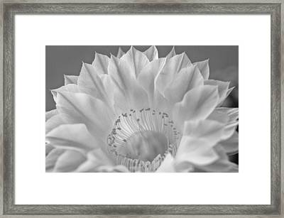 Cactus Bloom Burst Framed Print