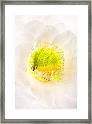 Cactus Bloom Number Five Framed Print