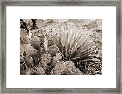 Cactus Framed Print by Bob Coates
