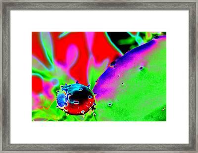 Cactus Bud Framed Print by Peter  McIntosh