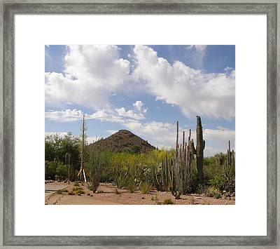 Cactus Country Framed Print by Jeanette Oberholtzer