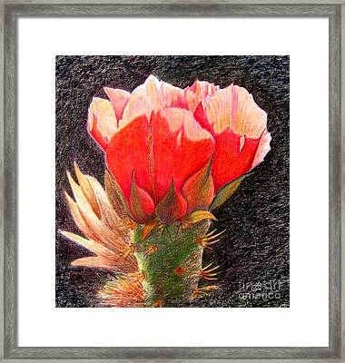 Cactus Cutie Framed Print by Marilyn Smith