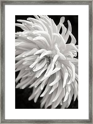 Cactus Dahlia Framed Print