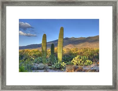 Cactus Desert Landscape Framed Print by Juli Scalzi