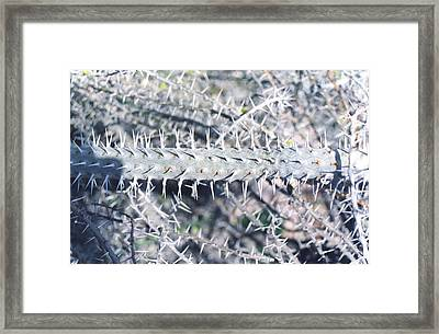 Cactus  Framed Print by Eliot LeBow