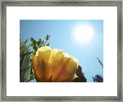 Cactus Enjoying Sun Light Framed Print