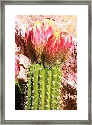 Cactus Flowe Bee Framed Print