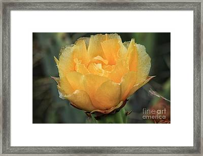 Cactus Flower 2016   Framed Print