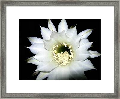 Framed Print featuring the photograph Cactus Flower At Night by Randy Rosenberger