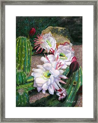 Cactus Flower Framed Print by Carole Haslock