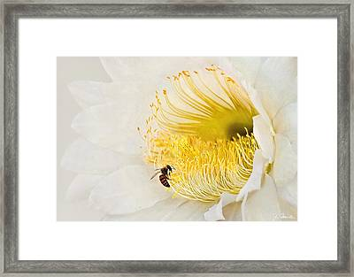 Framed Print featuring the photograph Cactus Flower Diner No. 2 by Joe Bonita