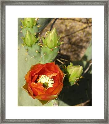 Framed Print featuring the photograph Cactus Flower by Jeanette Oberholtzer