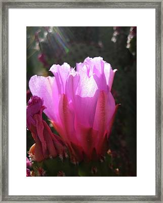 Cactus Flower Framed Print by Mary Ellen Frazee