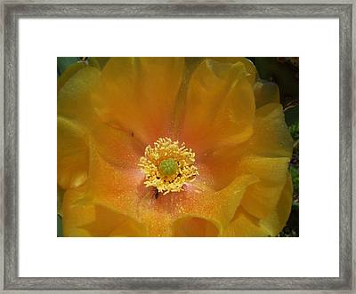 Cactus Flower Sharing Space Framed Print