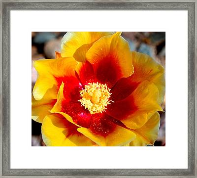 Cactus Flower V Framed Print by M Diane Bonaparte