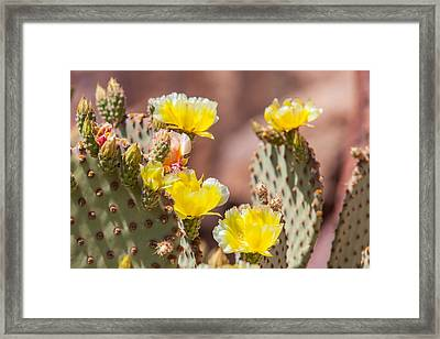 Cactus Flowers Framed Print