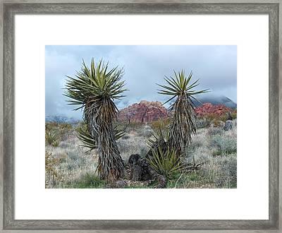 Cactus Frame Framed Print by Rita Tortorelli