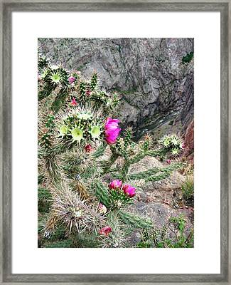 Cactus Gorge Framed Print by Peter  McIntosh