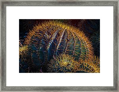Framed Print featuring the photograph Cactus by Harry Spitz
