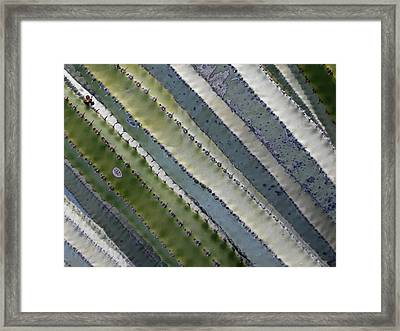 Cactus Highway - Euphorbia Canariensis Framed Print