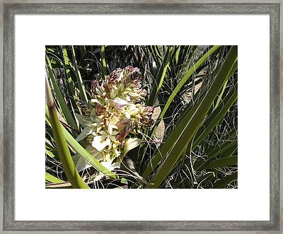 Cactus In Bloom Framed Print by Joan Taylor-Sullivant