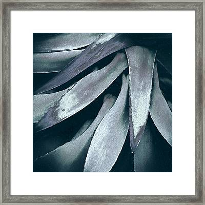 Cactus In Blue And Grey Framed Print