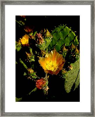 Cactus In Sunset Light Framed Print by James Granberry