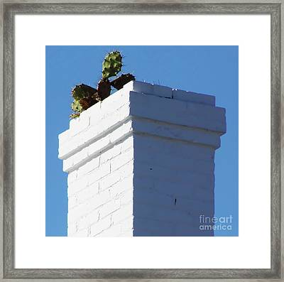 Cactus In The Chimney Framed Print by D Hackett