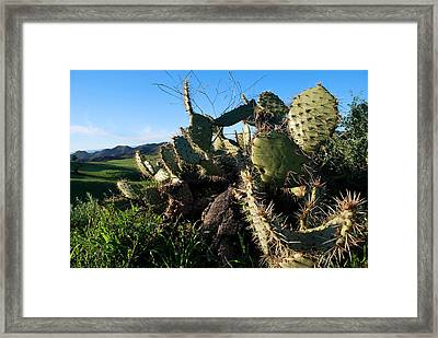 Framed Print featuring the photograph Cactus In The Mountains by Matt Harang