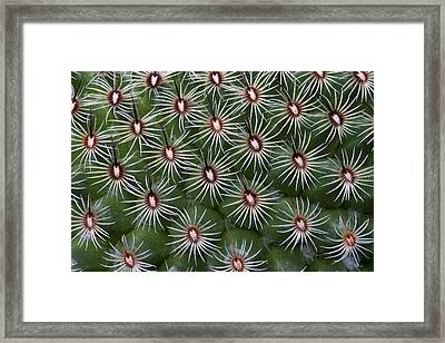 Framed Print featuring the photograph Cactus by Ken Barrett