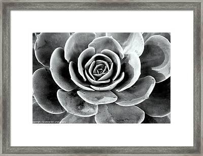 Cactus Ll Framed Print