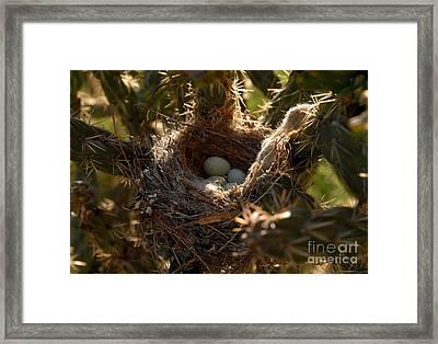 Cactus Nest Framed Print by David Lee Thompson