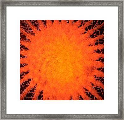 Cactus Nr3  Framed Print