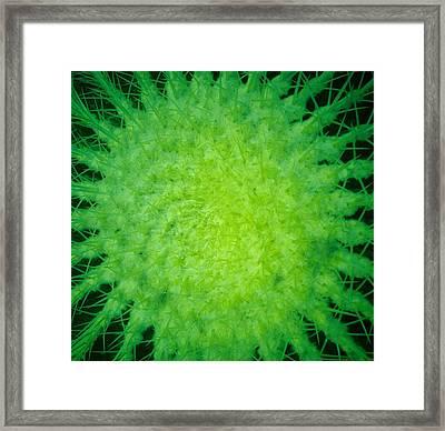 Cactus Nr4 Framed Print