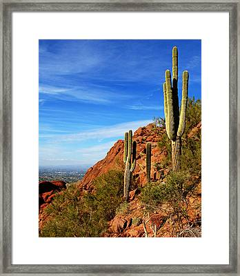 Cactus On Camelback 14x17 Framed Print by Daniel Woodrum