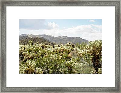 Cactus Paradise Framed Print by Amyn Nasser
