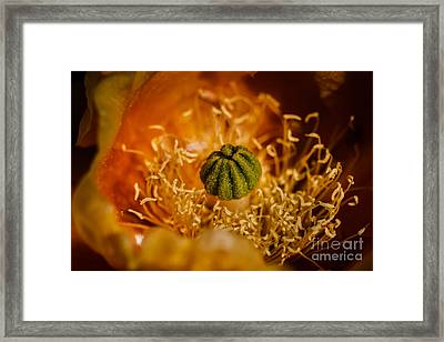 Cactus Pistil Framed Print by Robert Bales