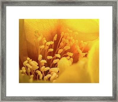 Framed Print featuring the photograph Cactus Pollen by Len Romanick