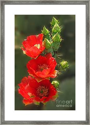 Cactus Red Beauty Framed Print by Marilyn Smith