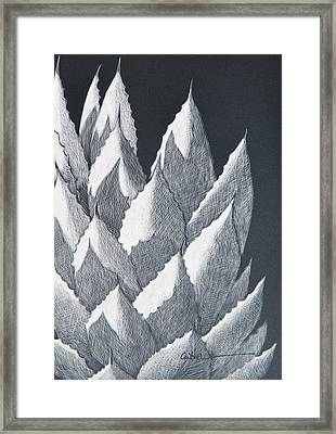 Cactus Reflections Framed Print by Diane Cutter