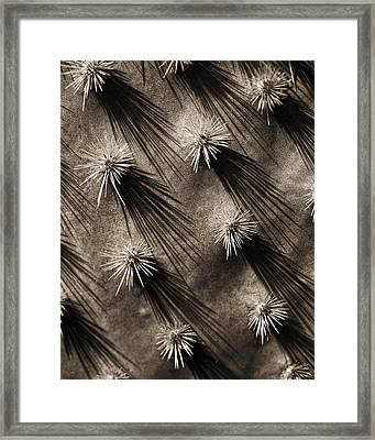Cactus Shadows Framed Print