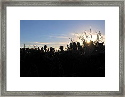 Framed Print featuring the photograph Cactus Silhouettes by Matt Harang